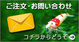 banner_inqu